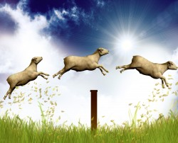 CountingSheep_thinkstock